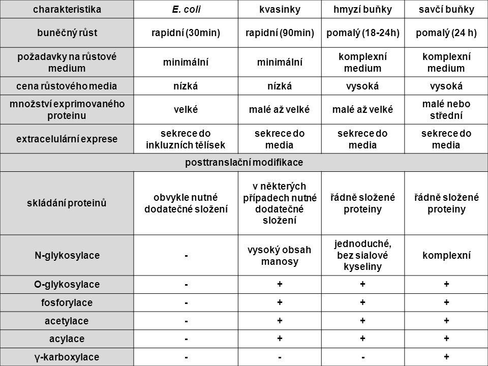 + rychlá produkce + nejvýkonnější (až 0.5 g na 1 litr kultury) + levné a jednoduché na manipulaci - chybí posttranslační úprava proteinů (neaktivní produkty eukaryotních genů) (neaktivní produkty eukaryotních genů) - přirozeně neprobíhá sekrece do média - preferují jiný genetický kód než vyšší eukaryota Bakteriální expresní systémy Escherichia coli
