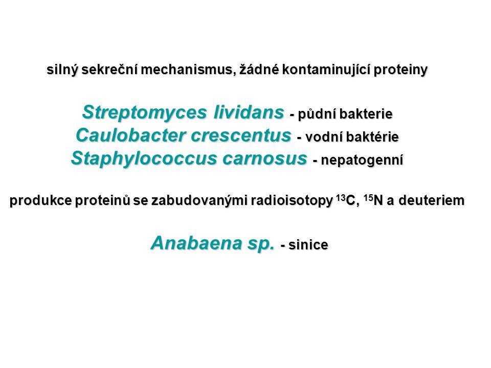 silný sekreční mechanismus, žádné kontaminující proteiny Streptomyces lividans - půdní bakterie Caulobacter crescentus - vodní baktérie Staphylococcus