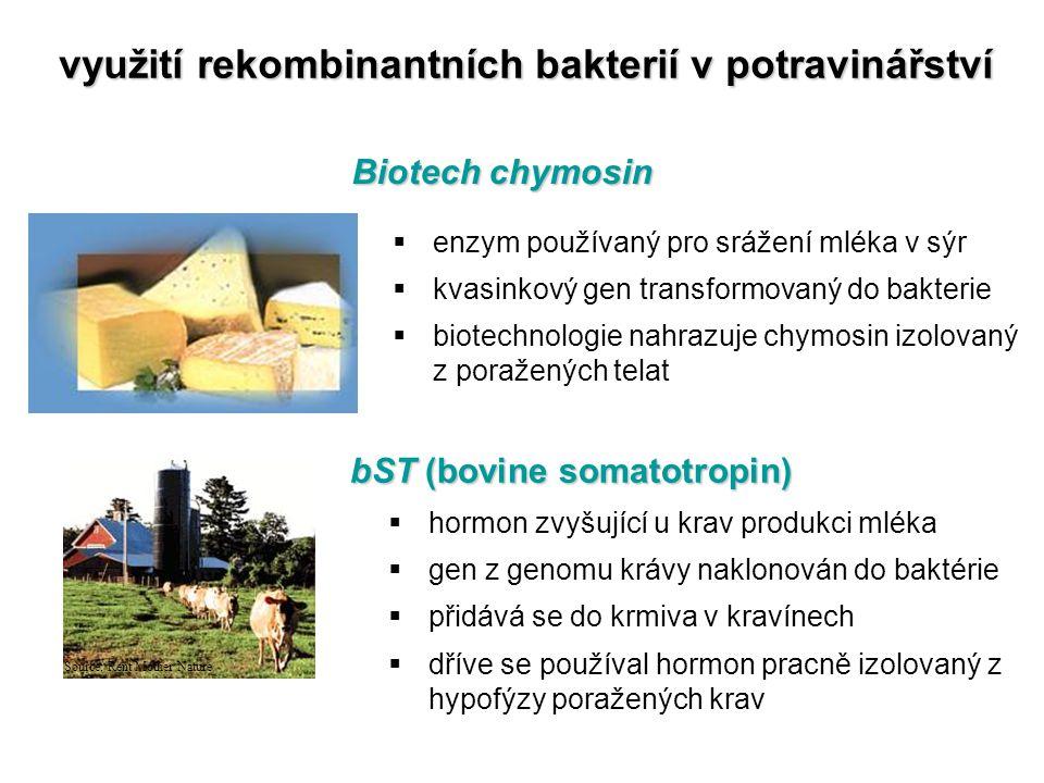 využití rekombinantních bakterií v potravinářství Biotech chymosin Source: Rent Mother Nature  enzym používaný pro srážení mléka v sýr  kvasinkový g