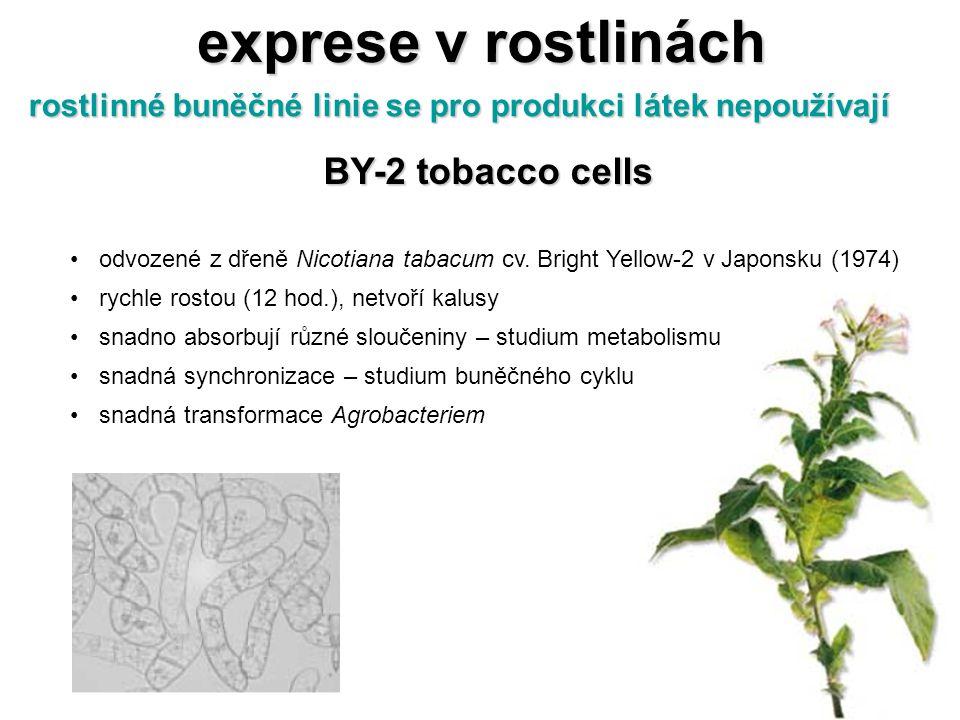 exprese v rostlinách rostlinné buněčné linie se pro produkci látek nepoužívají BY-2 tobacco cells odvozené z dřeně Nicotiana tabacum cv. Bright Yellow