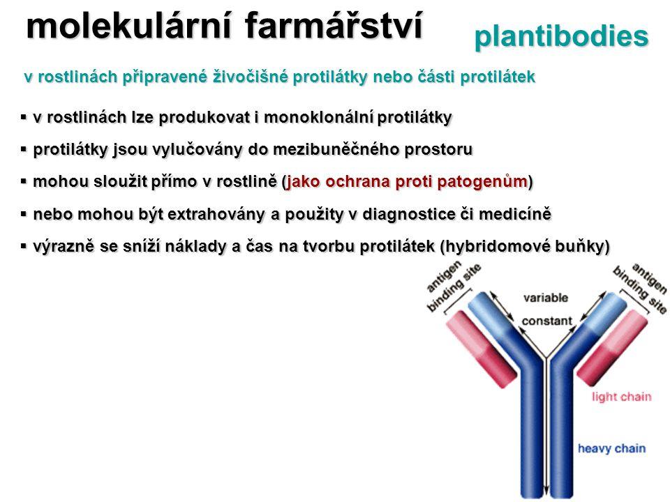  v rostlinách lze produkovat i monoklonální protilátky  protilátky jsou vylučovány do mezibuněčného prostoru  mohou sloužit přímo v rostlině (jako
