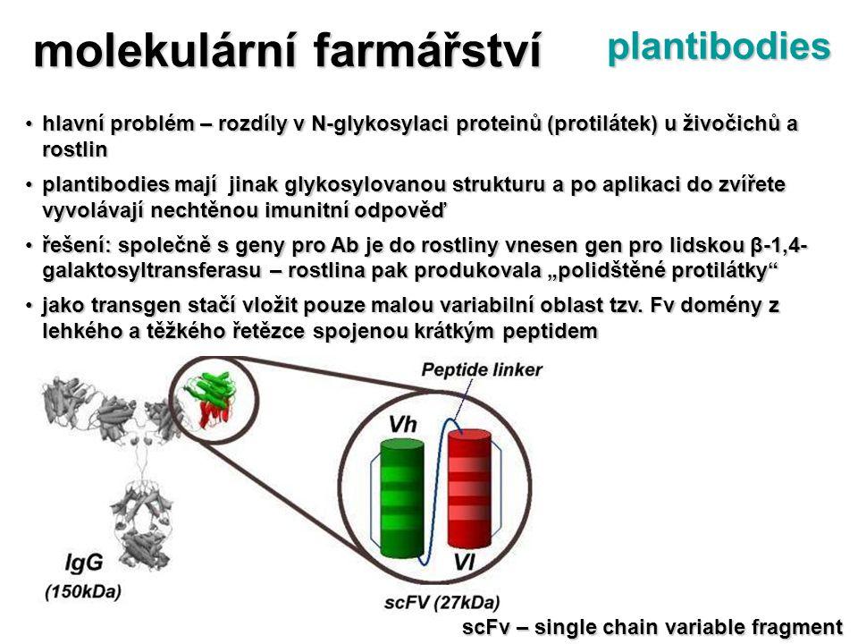 hlavní problém – rozdíly v N-glykosylaci proteinů (protilátek) u živočichů a rostlinhlavní problém – rozdíly v N-glykosylaci proteinů (protilátek) u ž