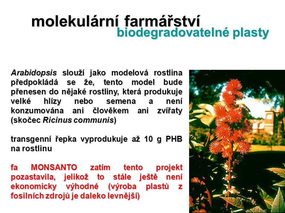 Arabidopsis slouží jako modelová rostlina předpokládá se že, tento model bude přenesen do nějaké rostliny, která produkuje velké hlízy nebo semena a n