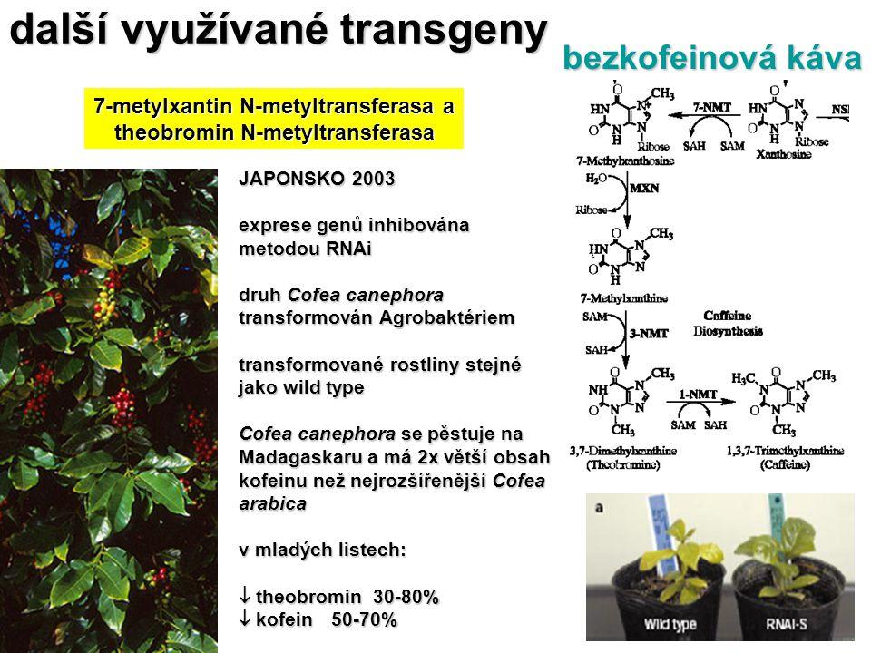 další využívané transgeny bezkofeinová káva 7-metylxantin N-metyltransferasa a theobromin N-metyltransferasa JAPONSKO 2003 exprese genů inhibována metodou RNAi druh Cofea canephora transformován Agrobaktériem transformované rostliny stejné jako wild type Cofea canephora se pěstuje na Madagaskaru a má 2x větší obsah kofeinu než nejrozšířenější Cofea arabica v mladých listech:  theobromin 30-80%  kofein 50-70%