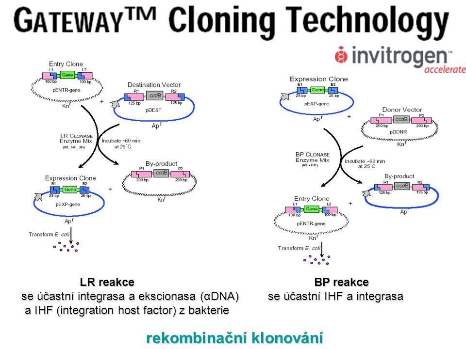 LR reakce BP reakce LR reakce BP reakce se účastní integrasa a ekscionasa (αDNA) se účastní IHF a integrasa a IHF (integration host factor) z bakterie