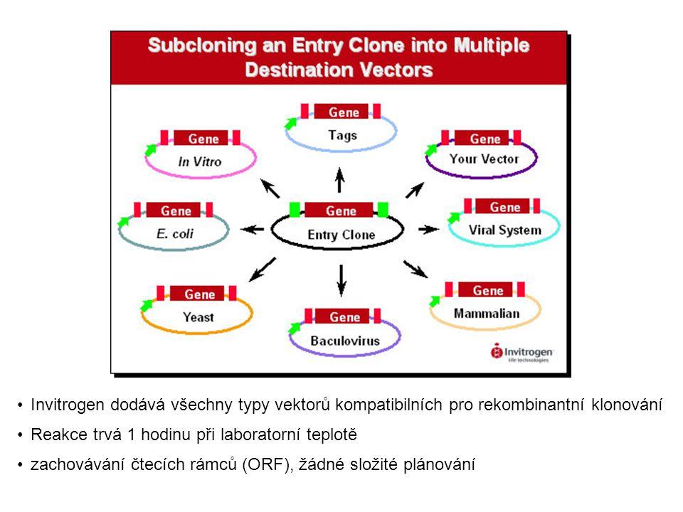 YEAST TWO HYBRID SYSTEM PRO STUDIUM PROTEIN-PROTEIN INTERAKCÍ – význam pro studium regulačních a signálních drahnaklonovanácDNAknihovna z libovolného euk.organismu konstitutivnípromotor kvasinkovýchromozom HYBRIDNÍ EXPRESNÍ KNIHOVNY HYBRIDNÍ EXPRESNÍ KNIHOVNY systém pro studium interakce protein - protein, bait vektor (návnada) obsahuje gen pro protein, který studujeme a fish (prey) vektor (obsahuje danou cDNA expresní knihovnu)