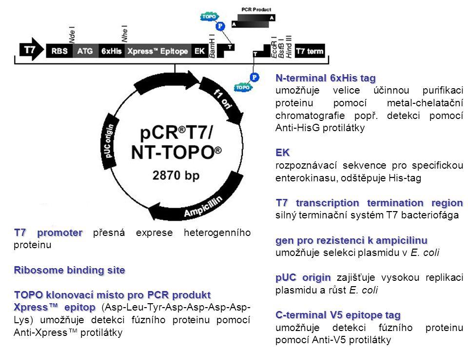 T7 promoter T7 promoter přesná exprese heterogenního proteinu Ribosome binding site TOPO klonovací místo pro PCR produkt Xpress™ epitop Xpress™ epitop