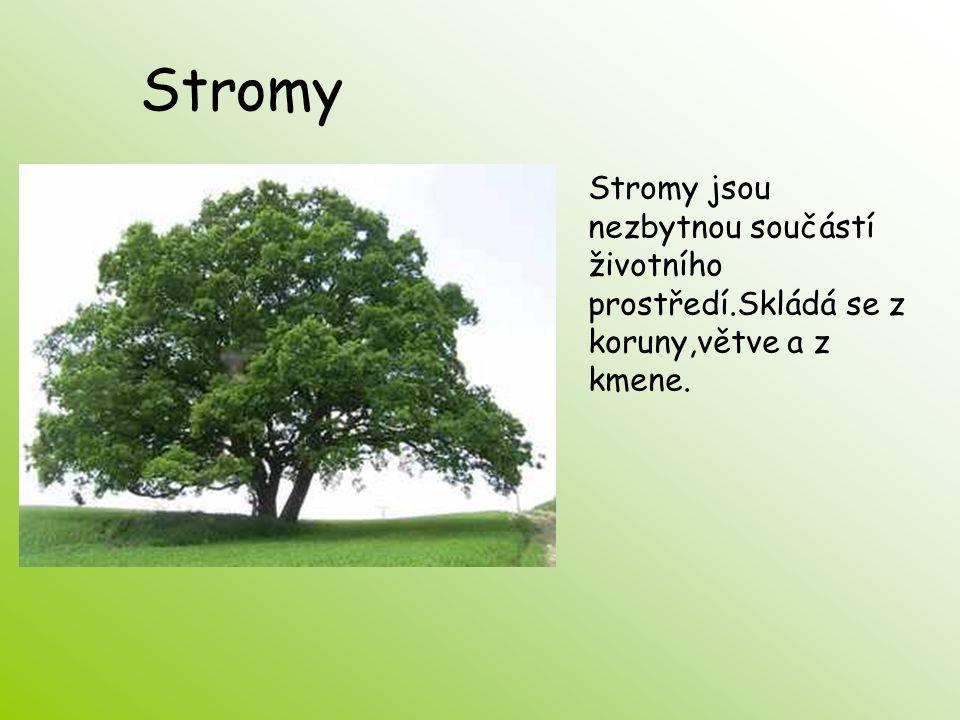 Stromy Stromy jsou nezbytnou součástí životního prostředí.Skládá se z koruny,větve a z kmene.