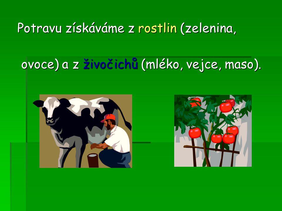 Potravu získáváme z rostlin (zelenina, ovoce) a z živočichů (mléko, vejce, maso).