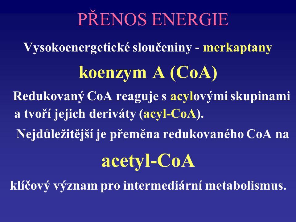 PŘENOS ENERGIE Vysokoenergetické sloučeniny - merkaptany koenzym A (CoA) Redukovaný CoA reaguje s acylovými skupinami a tvoří jejich deriváty (acyl-CoA).