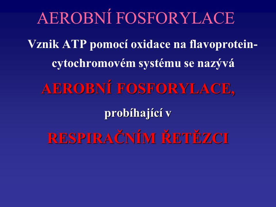 AEROBNÍ FOSFORYLACE Vznik ATP pomocí oxidace na flavoprotein- cytochromovém systému se nazývá AEROBNÍ FOSFORYLACE, probíhající v RESPIRAČNÍM ŘETĚZCI
