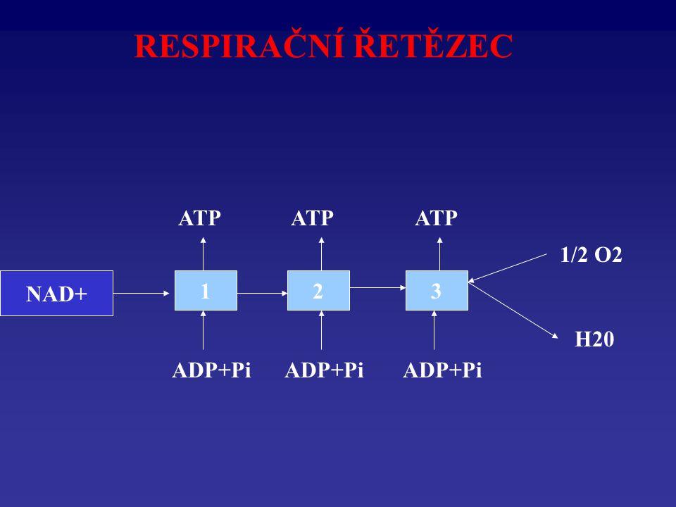 RESPIRAČNÍ ŘETĚZEC NADH2123 1/2 O2 H20 ADP+Pi ATP NAD+