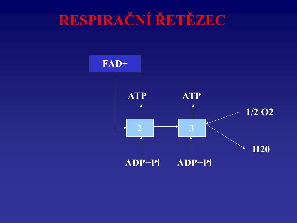 RESPIRAČNÍ ŘETĚZEC 23 1/2 O2 H20 ADP+Pi ATP FADH2FAD+