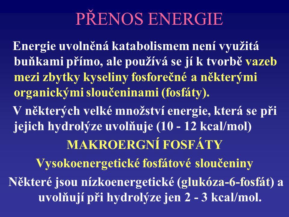 PŘENOS ENERGIE Energie uvolněná katabolismem není využitá buňkami přímo, ale používá se jí k tvorbě vazeb mezi zbytky kyseliny fosforečné a některými organickými sloučeninami (fosfáty).