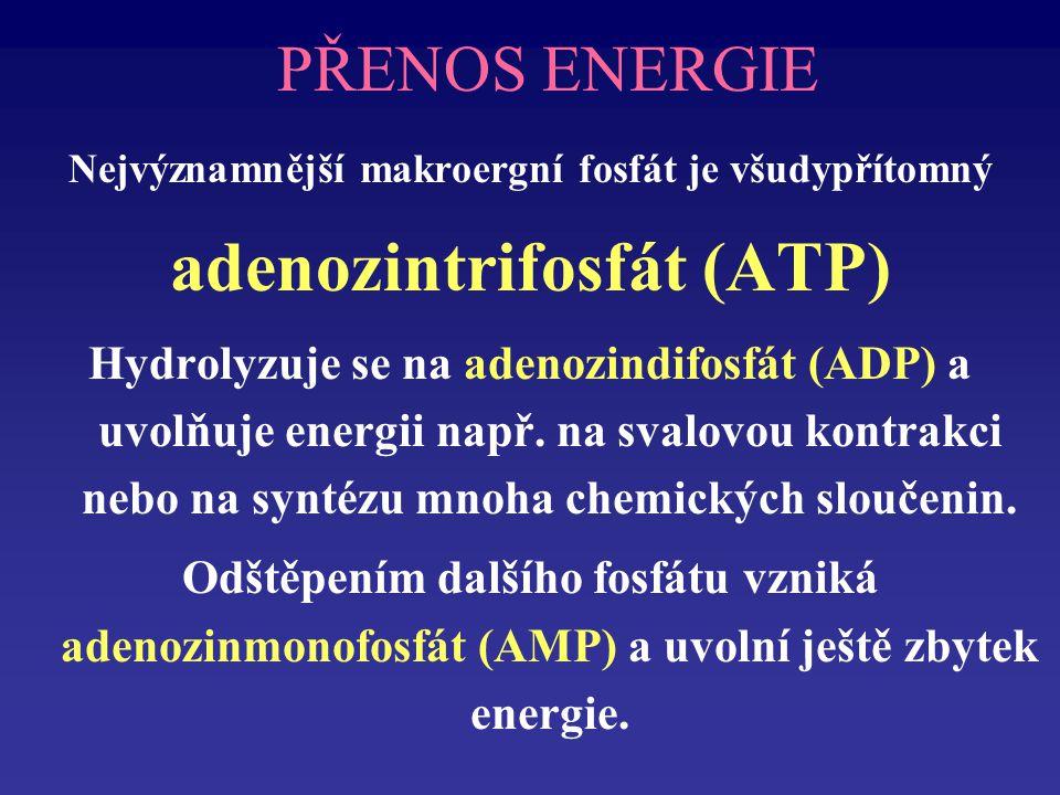 PPPadenozinPPP využitelná energie ATPADPPi+ Vysoce-energetické fosfátové vazby