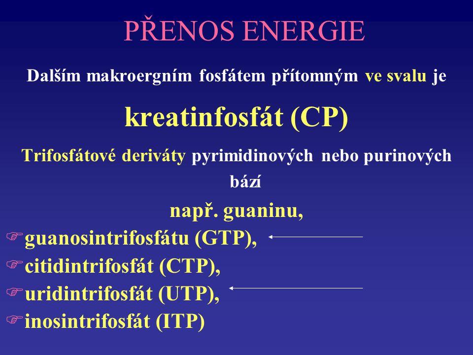 PŘENOS ENERGIE Dalším makroergním fosfátem přítomným ve svalu je kreatinfosfát (CP) Trifosfátové deriváty pyrimidinových nebo purinových bází např.