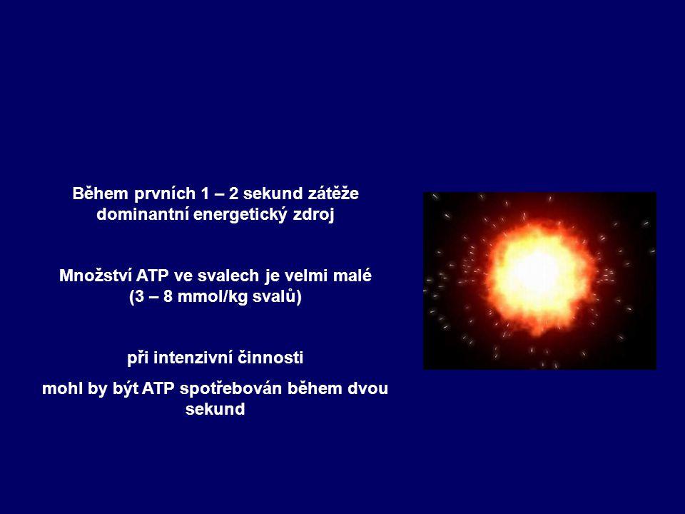 Makroergní fosfáty ATP a CP Hned od začátku resyntéza ATP z CP CP - zásoba okamžitě dostupné energie Celý systém ATP- CP velmi malá energie celkem asi 5,7 – 6,9 kcal Hradec Králové, 12.