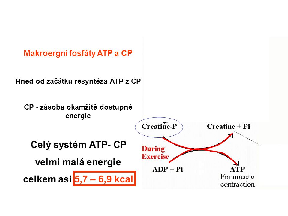 Podíly anaerobních systémů na krytí energetického výdeje při tělesné práci 1.