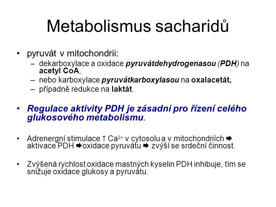 Metabolismus sacharidů pyruvát v mitochondrii: –dekarboxylace a oxidace pyruvátdehydrogenasou (PDH) na acetyl CoA, –nebo karboxylace pyruvátkarboxylasou na oxalacetát, –případně redukce na laktát.
