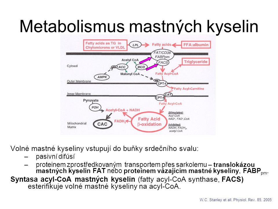Metabolismus mastných kyselin Volné mastné kyseliny vstupují do buňky srdečního svalu: –pasivní difúsí –proteinem zprostředkovaným transportem přes sarkolemu – translokázou mastných kyselin FAT nebo proteinem vázajícím mastné kyseliny, FABP pm.