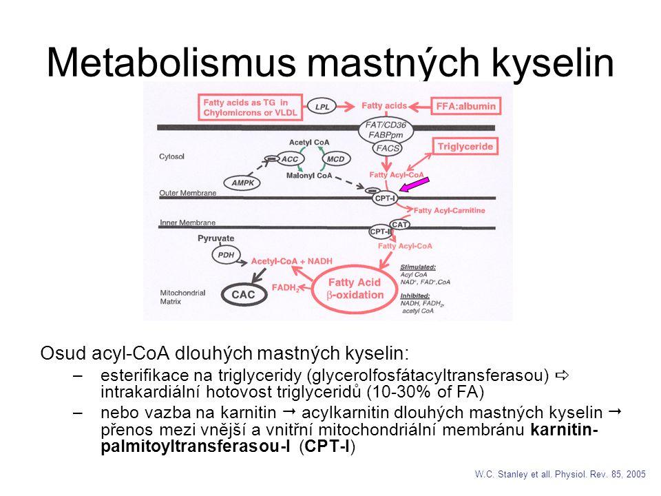 Metabolismus mastných kyselin Osud acyl-CoA dlouhých mastných kyselin: –esterifikace na triglyceridy (glycerolfosfátacyltransferasou)  intrakardiální hotovost triglyceridů (10-30% of FA) –nebo vazba na karnitin  acylkarnitin dlouhých mastných kyselin  přenos mezi vnější a vnitřní mitochondriální membránu karnitin- palmitoyltransferasou-I (CPT-I) W.C.