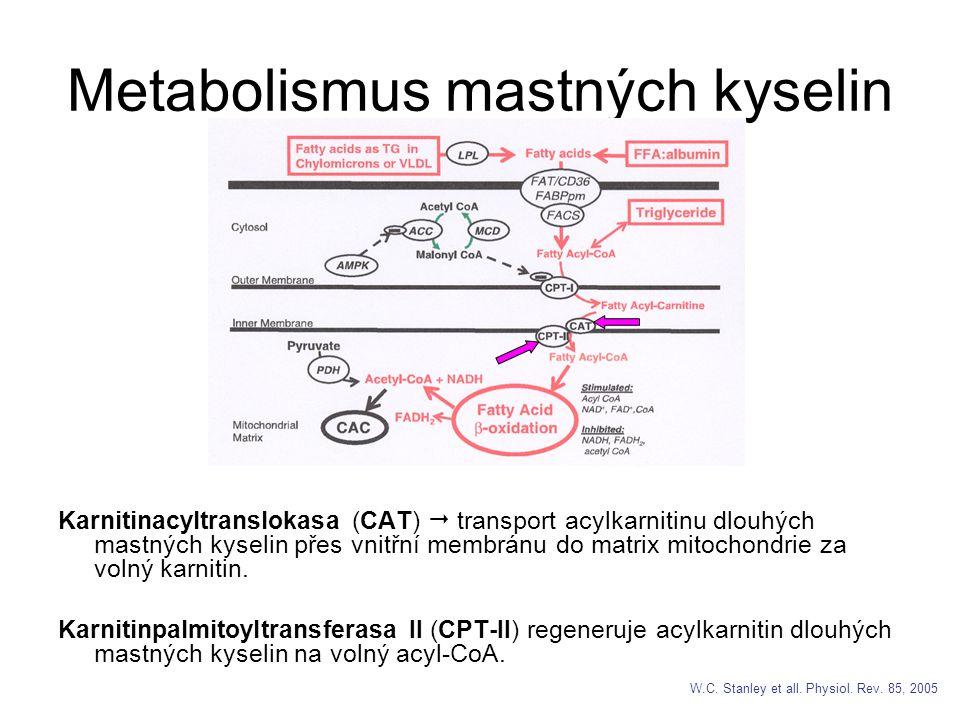 Metabolismus mastných kyselin Karnitinacyltranslokasa (CAT)  transport acylkarnitinu dlouhých mastných kyselin přes vnitřní membránu do matrix mitochondrie za volný karnitin.