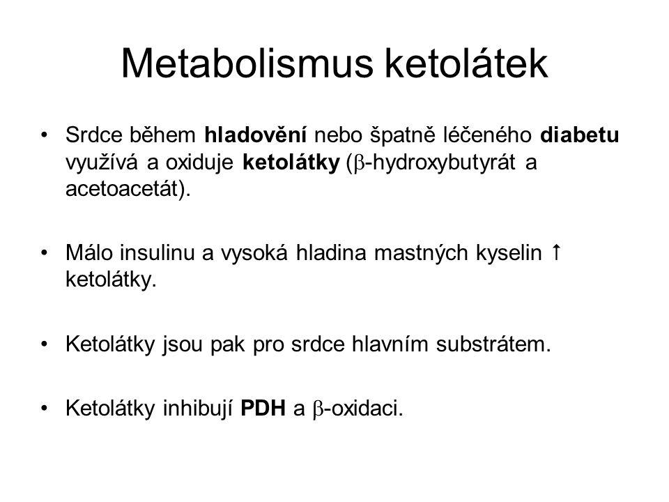 Metabolismus ketolátek Srdce během hladovění nebo špatně léčeného diabetu využívá a oxiduje ketolátky (  -hydroxybutyrát a acetoacetát).