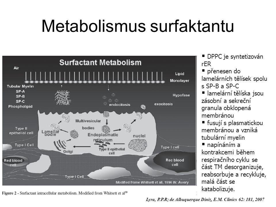  DPPC je syntetizován rER  přenesen do lamelárních tělísek spolu s SP-B a SP-C  lamelární tělíska jsou zásobní a sekreční granula obklopená membránou  fusují s plasmatickou membránou a vzniká tubulární myelin  napínáním a kontrakcemi během respiračního cyklu se část TM desorganizuje, reabsorbuje a recykluje, malá část se katabolizuje.