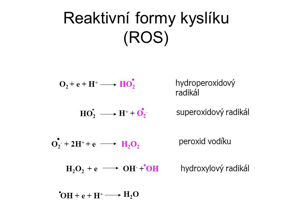 O 2 + e + H + HO 2.hydroperoxidový radikál HO 2. H + + O 2 -.