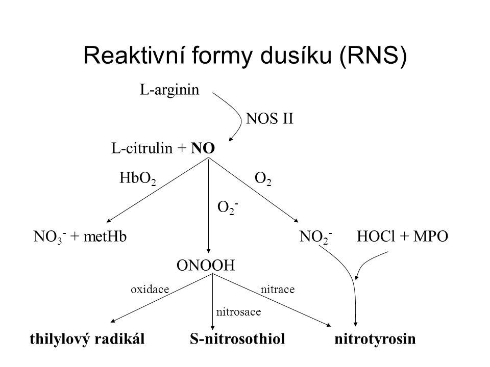 Reaktivní formy dusíku (RNS) L-arginin NOS II L-citrulin + NO HbO 2 O 2 O 2 - NO 3 - + metHb NO 2 - HOCl + MPO ONOOH oxidace nitrace nitrosace thilylový radikál S-nitrosothiol nitrotyrosin