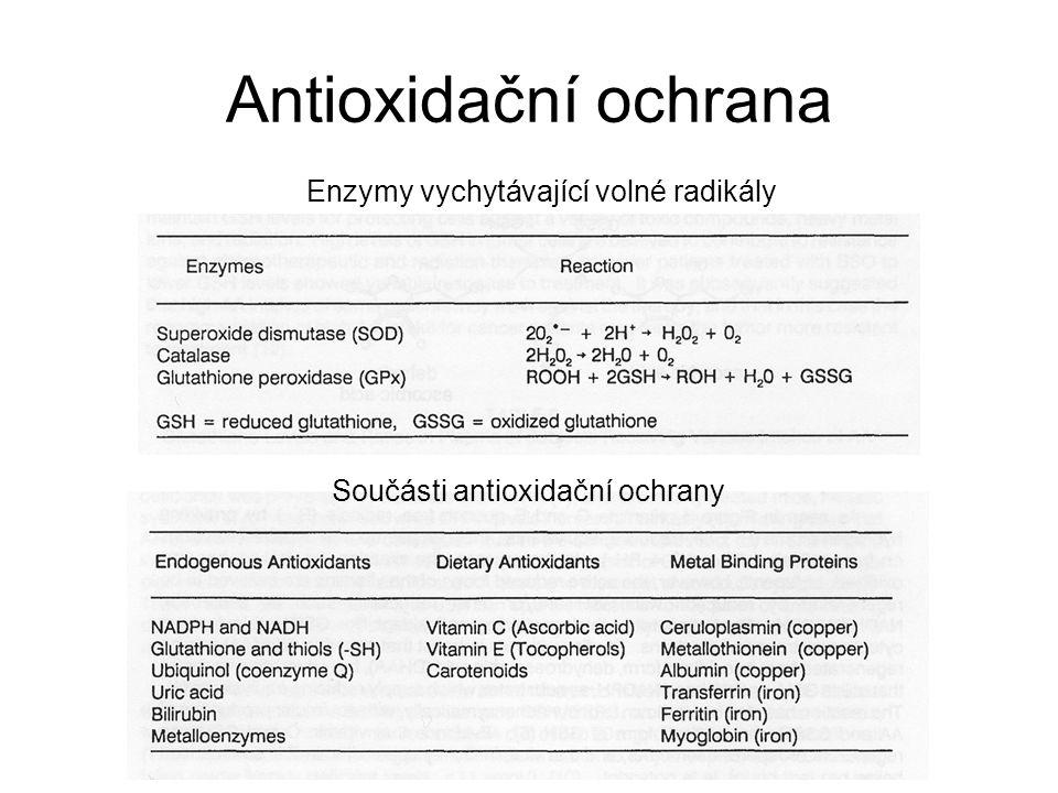 Součásti antioxidační ochrany Enzymy vychytávající volné radikály Antioxidační ochrana