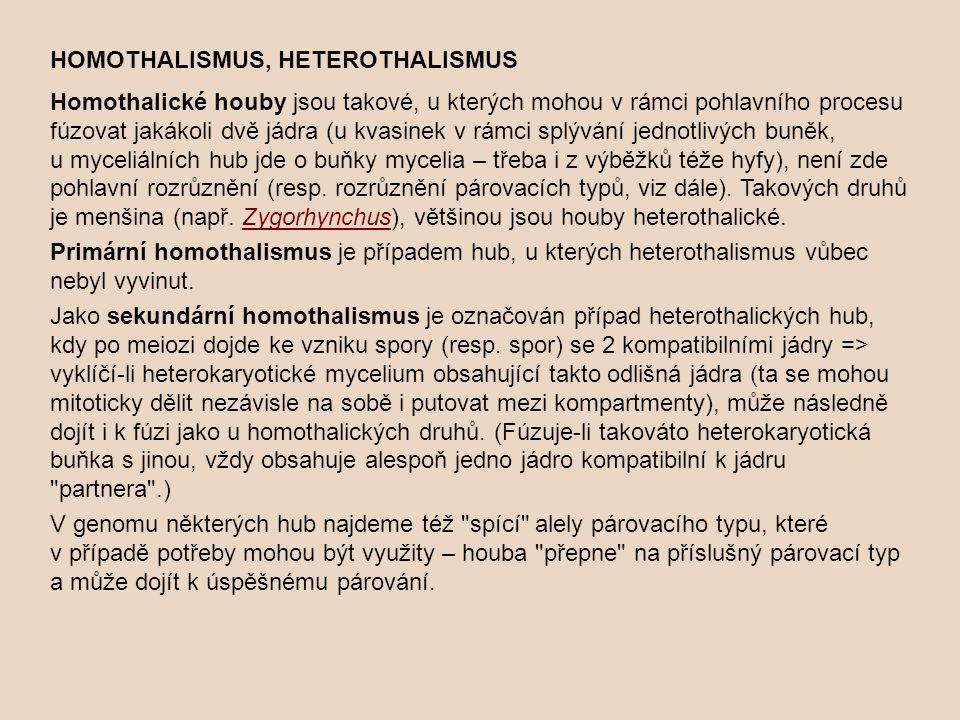 HOMOTHALISMUS, HETEROTHALISMUS Homothalické houby jsou takové, u kterých mohou v rámci pohlavního procesu fúzovat jakákoli dvě jádra (u kvasinek v rám