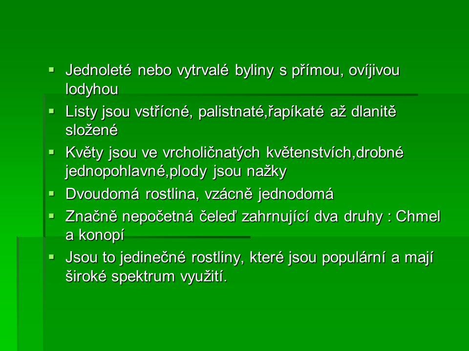Chmel otáčivý (Humulus)  Vytrvalá dvoudomá pravotočivá liána  Lodyhy 2 až 6m dlouhé drsně chlupaté  Listy vstřícné,dlouze řapíkaté  Vyskytuje se po celém mírném páse  Květy nenápadné, světle zelené  Využití: pivovarnictví, sedativum, zdroj vitamínů, zelenina,kosmetické přípravky