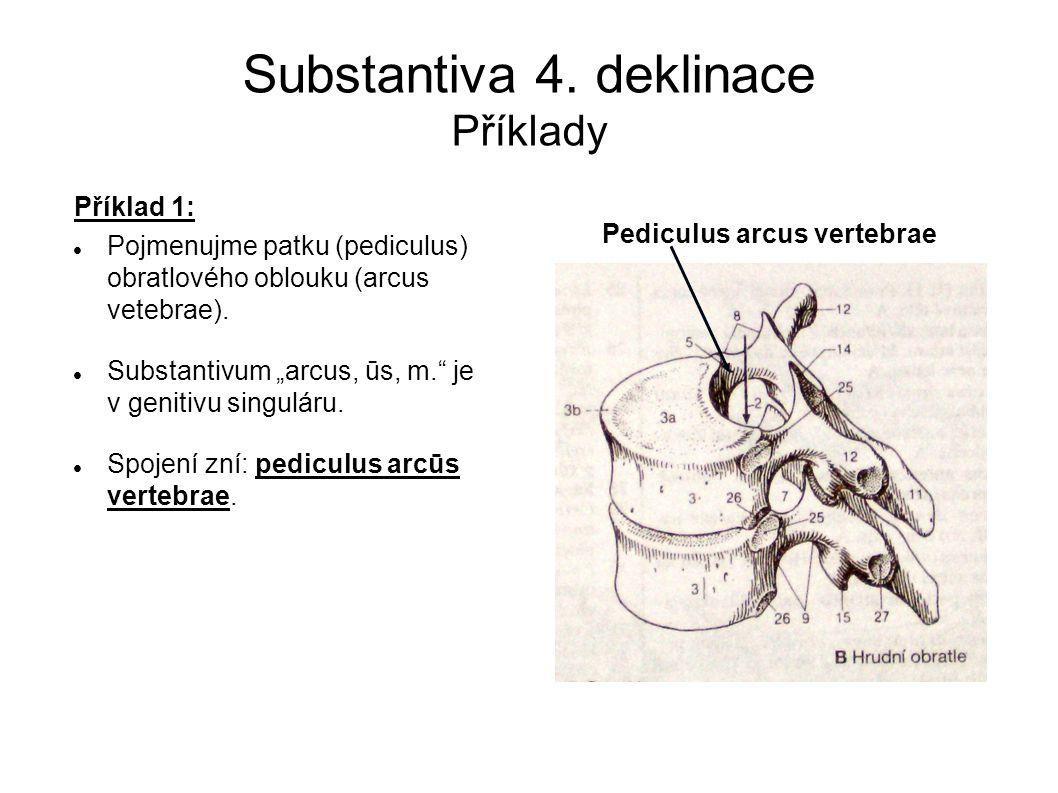 """Substantiva 4. deklinace Příklady Příklad 1: Pojmenujme patku (pediculus) obratlového oblouku (arcus vetebrae). Substantivum """"arcus, ūs, m."""" je v geni"""