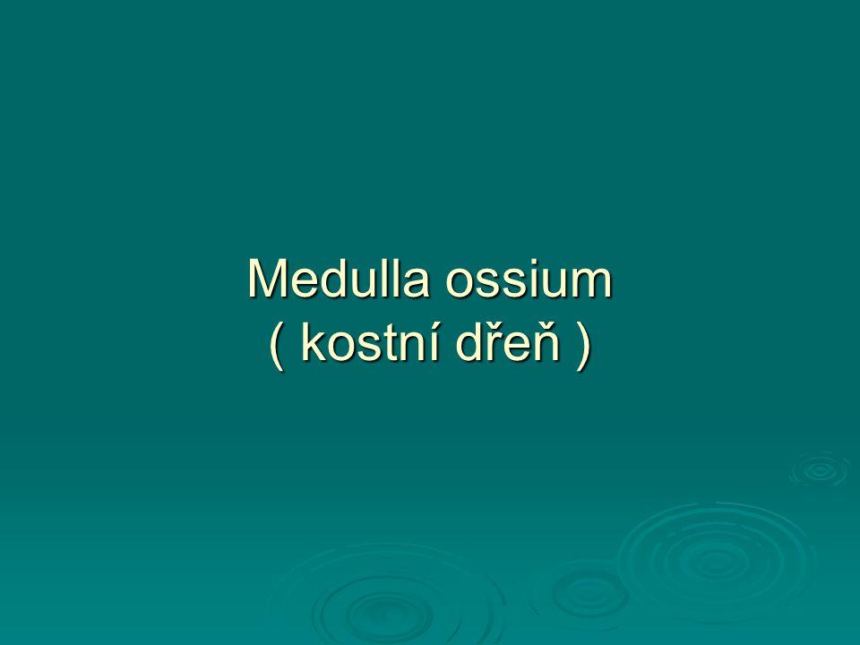 Medulla ossium ( kostní dřeň )