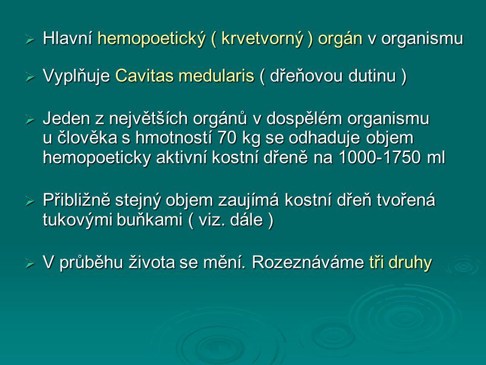  Hlavní hemopoetický ( krvetvorný ) orgán v organismu  Vyplňuje Cavitas medularis ( dřeňovou dutinu )  Jeden z největších orgánů v dospělém organismu u člověka s hmotností 70 kg se odhaduje objem hemopoeticky aktivní kostní dřeně na 1000-1750 ml  Přibližně stejný objem zaujímá kostní dřeň tvořená tukovými buňkami ( viz.