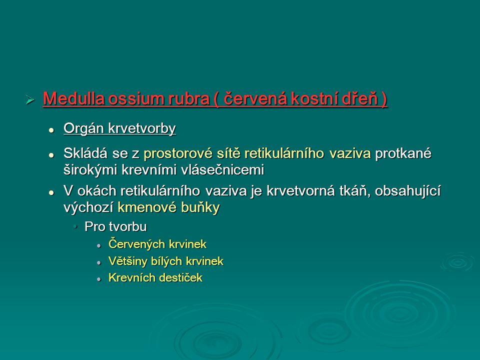  Medulla ossium rubra ( červená kostní dřeň ) Orgán krvetvorby Orgán krvetvorby Skládá se z prostorové sítě retikulárního vaziva protkané širokými krevními vlásečnicemi Skládá se z prostorové sítě retikulárního vaziva protkané širokými krevními vlásečnicemi V okách retikulárního vaziva je krvetvorná tkáň, obsahující výchozí kmenové buňky V okách retikulárního vaziva je krvetvorná tkáň, obsahující výchozí kmenové buňky Pro tvorbuPro tvorbu Červených krvinek Červených krvinek Většiny bílých krvinek Většiny bílých krvinek Krevních destiček Krevních destiček