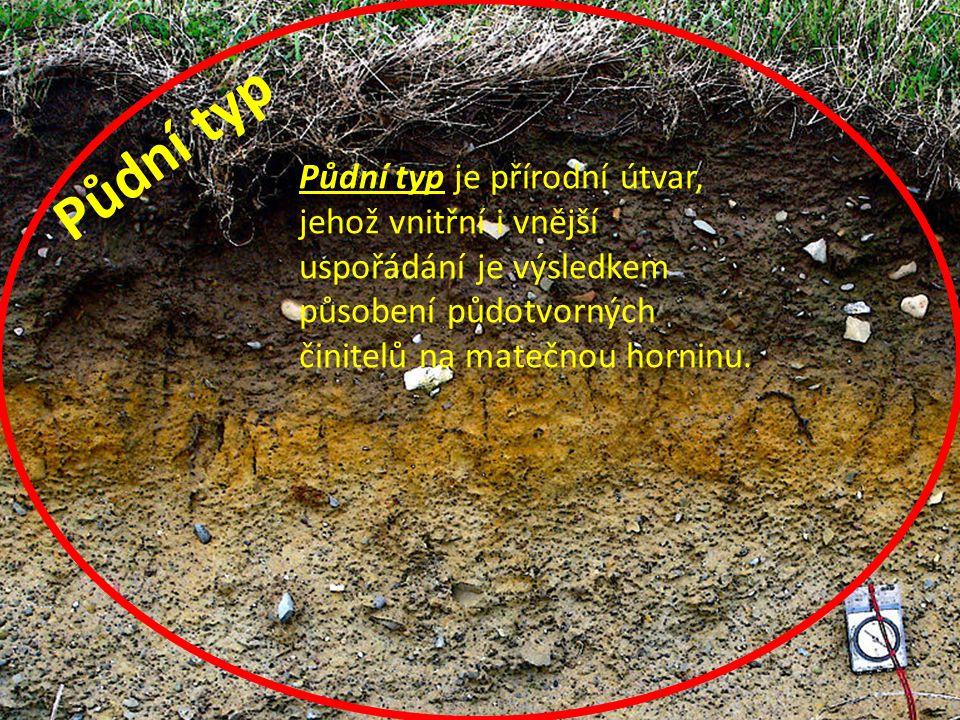 Půdní typ Půdní typ je přírodní útvar, jehož vnitřní i vnější uspořádání je výsledkem působení půdotvorných činitelů na matečnou horninu.