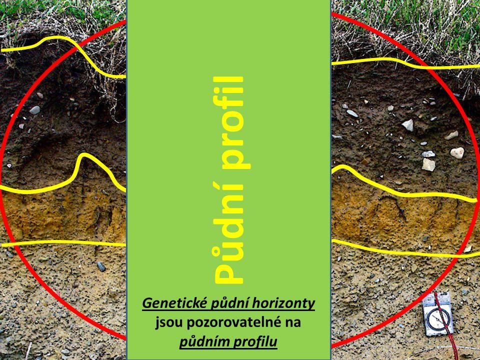 Půdní profil Genetické půdní horizonty jsou pozorovatelné na půdním profilu