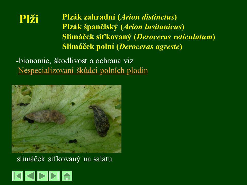 Plži Plzák zahradní (Arion distinctus) Plzák španělský (Arion lusitanicus) Slimáček síťkovaný (Deroceras reticulatum) Slimáček polní (Deroceras agreste) -bionomie, škodlivost a ochrana viz Nespecializovaní škůdci polních plodin slimáček síťkovaný na salátu
