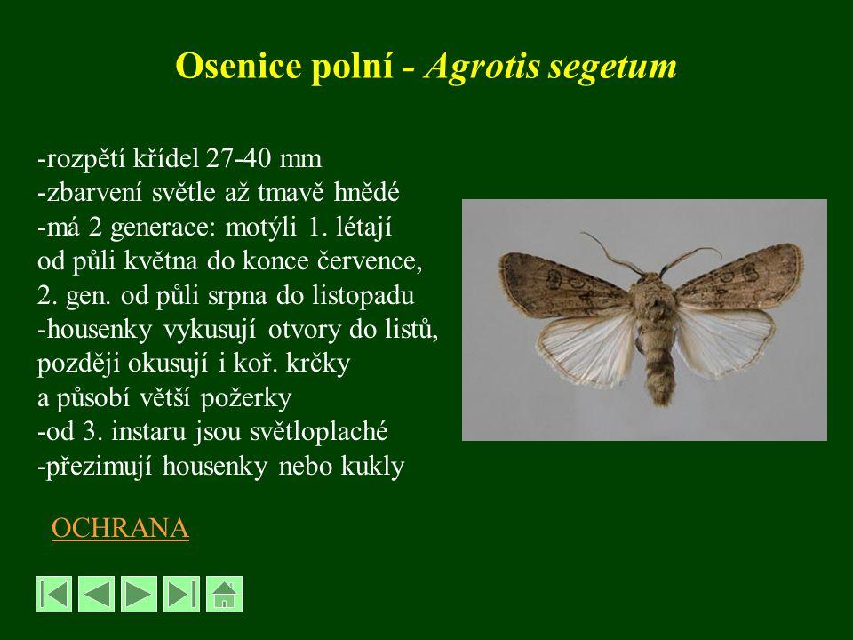 Osenice polní - Agrotis segetum -rozpětí křídel 27-40 mm -zbarvení světle až tmavě hnědé -má 2 generace: motýli 1. létají od půli května do konce červ