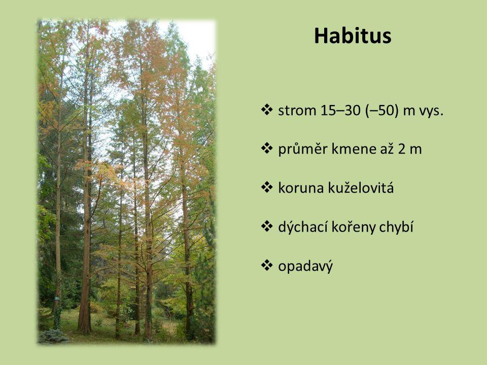 Habitus  strom 15–30 (–50) m vys.  průměr kmene až 2 m  koruna kuželovitá  dýchací kořeny chybí  opadavý
