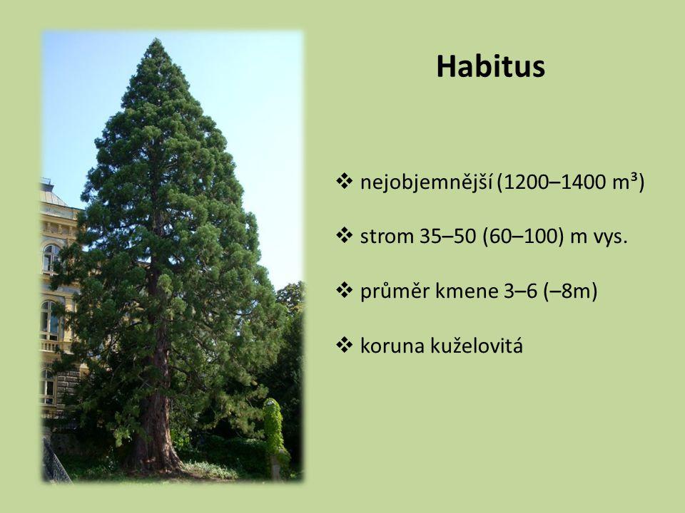 Habitus  nejobjemnější (1200–1400 m³)  strom 35–50 (60–100) m vys.  průměr kmene 3–6 (–8m)  koruna kuželovitá