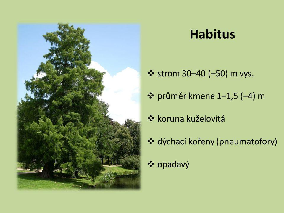 Habitus  strom 30–40 (–50) m vys.  průměr kmene 1–1,5 (–4) m  koruna kuželovitá  dýchací kořeny (pneumatofory)  opadavý