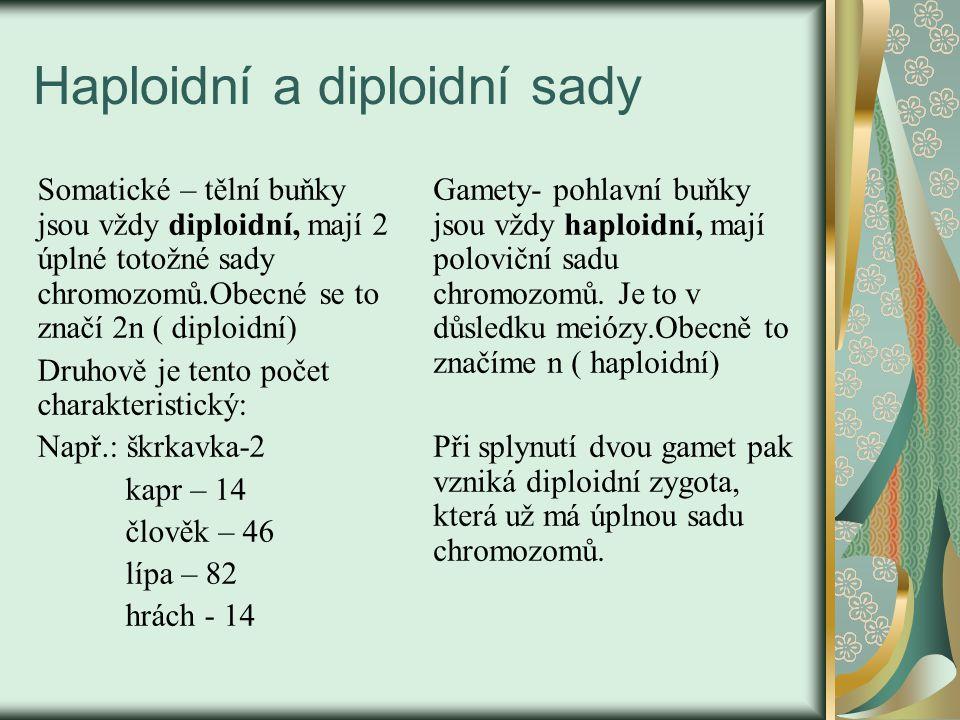 Haploidní a diploidní sady Somatické – tělní buňky jsou vždy diploidní, mají 2 úplné totožné sady chromozomů.Obecné se to značí 2n ( diploidní) Druhově je tento počet charakteristický: Např.: škrkavka-2 kapr – 14 člověk – 46 lípa – 82 hrách - 14 Gamety- pohlavní buňky jsou vždy haploidní, mají poloviční sadu chromozomů.