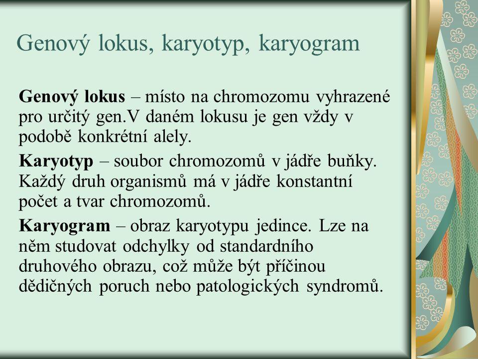 Genový lokus, karyotyp, karyogram Genový lokus – místo na chromozomu vyhrazené pro určitý gen.V daném lokusu je gen vždy v podobě konkrétní alely. Kar