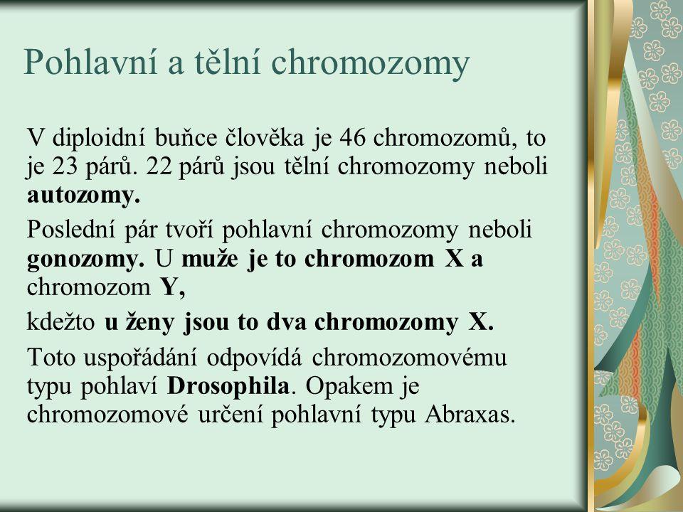 Pohlavní a tělní chromozomy V diploidní buňce člověka je 46 chromozomů, to je 23 párů. 22 párů jsou tělní chromozomy neboli autozomy. Poslední pár tvo