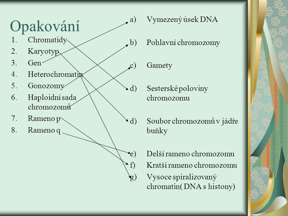 Opakování 1.Chromatidy 2.Karyotyp 3.Gen 4.Heterochromatin 5.Gonozomy 6.Haploidní sada chromozomů 7.Rameno p 8.Rameno q a)Vymezený úsek DNA b)Pohlavní chromozomy c)Gamety d)Sesterské poloviny chromozomu d)Soubor chromozomů v jádře buňky e)Delší rameno chromozomu f)Kratší rameno chromozomu g)Vysoce spiralizovaný chromatin( DNA s histony)