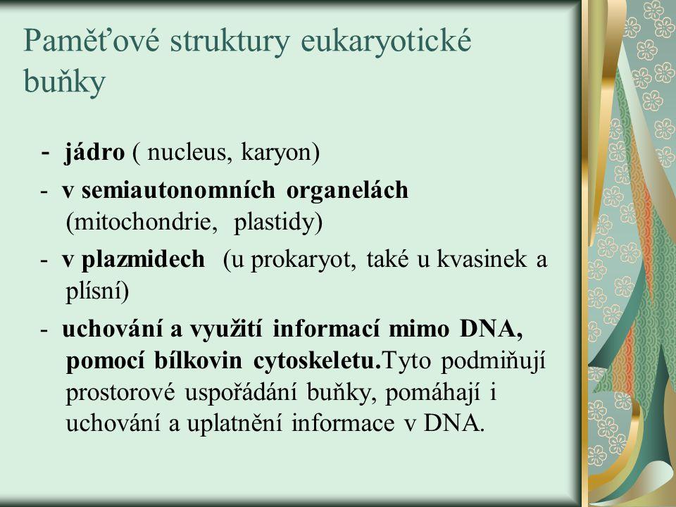 Paměťové struktury eukaryotické buňky - jádro ( nucleus, karyon) - v semiautonomních organelách (mitochondrie, plastidy) - v plazmidech (u prokaryot, také u kvasinek a plísní) - uchování a využití informací mimo DNA, pomocí bílkovin cytoskeletu.Tyto podmiňují prostorové uspořádání buňky, pomáhají i uchování a uplatnění informace v DNA.