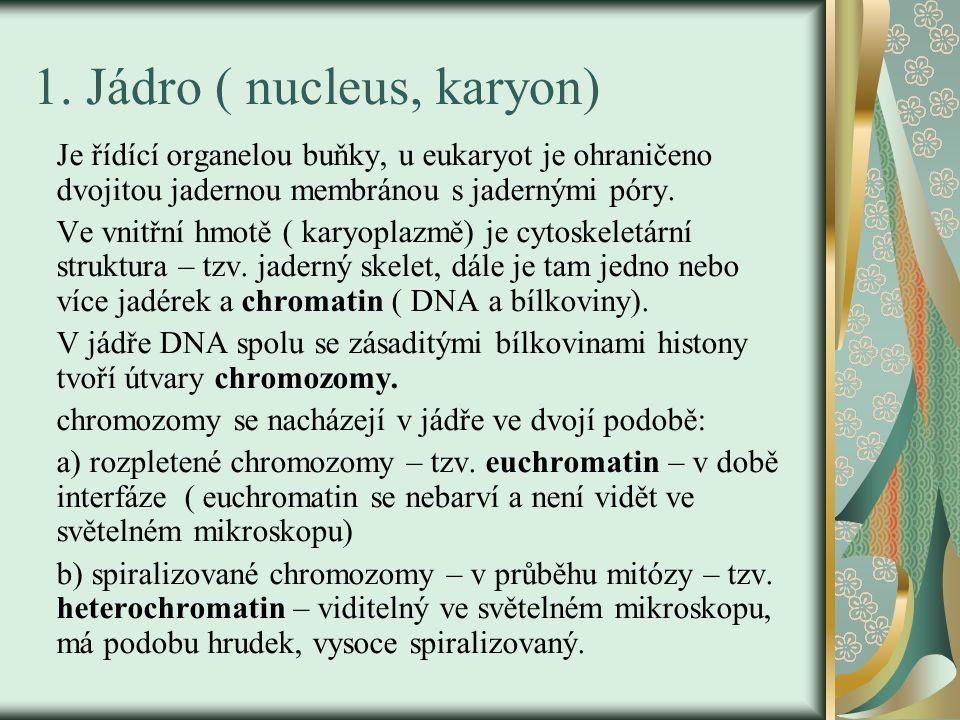 1. Jádro ( nucleus, karyon) Je řídící organelou buňky, u eukaryot je ohraničeno dvojitou jadernou membránou s jadernými póry. Ve vnitřní hmotě ( karyo